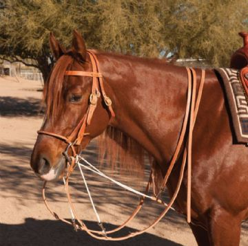 Schutz Brothers German Martingale with Split Reins